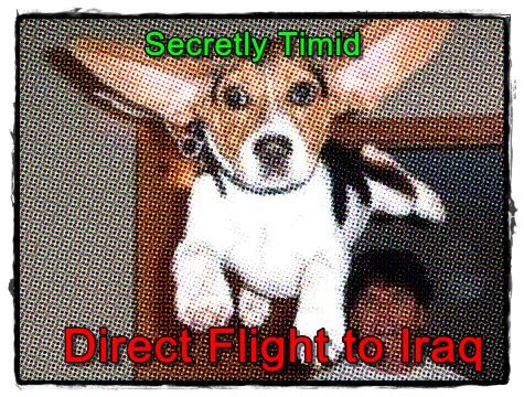 Direct Flight to Iraq
